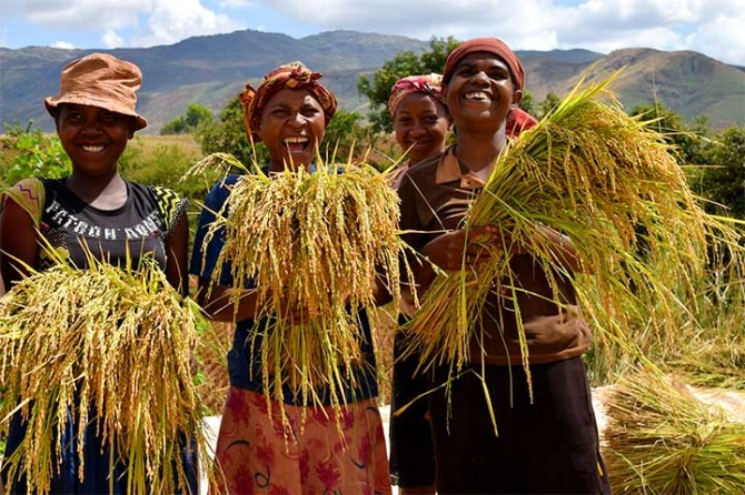 goal of doubling rice production in sub saharan africa in 10 years
