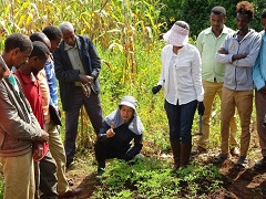 Farmers Are Implementing Jica S Market Oriented Farming Ethiopia Countries Regions Jica