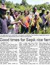 Good times for Sepik rice farmers