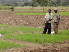 Research on Teff with Wolaita Sodo University | Technical