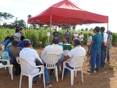 Improving Sesame Seed Production in Paraguay | About JICA | JICA